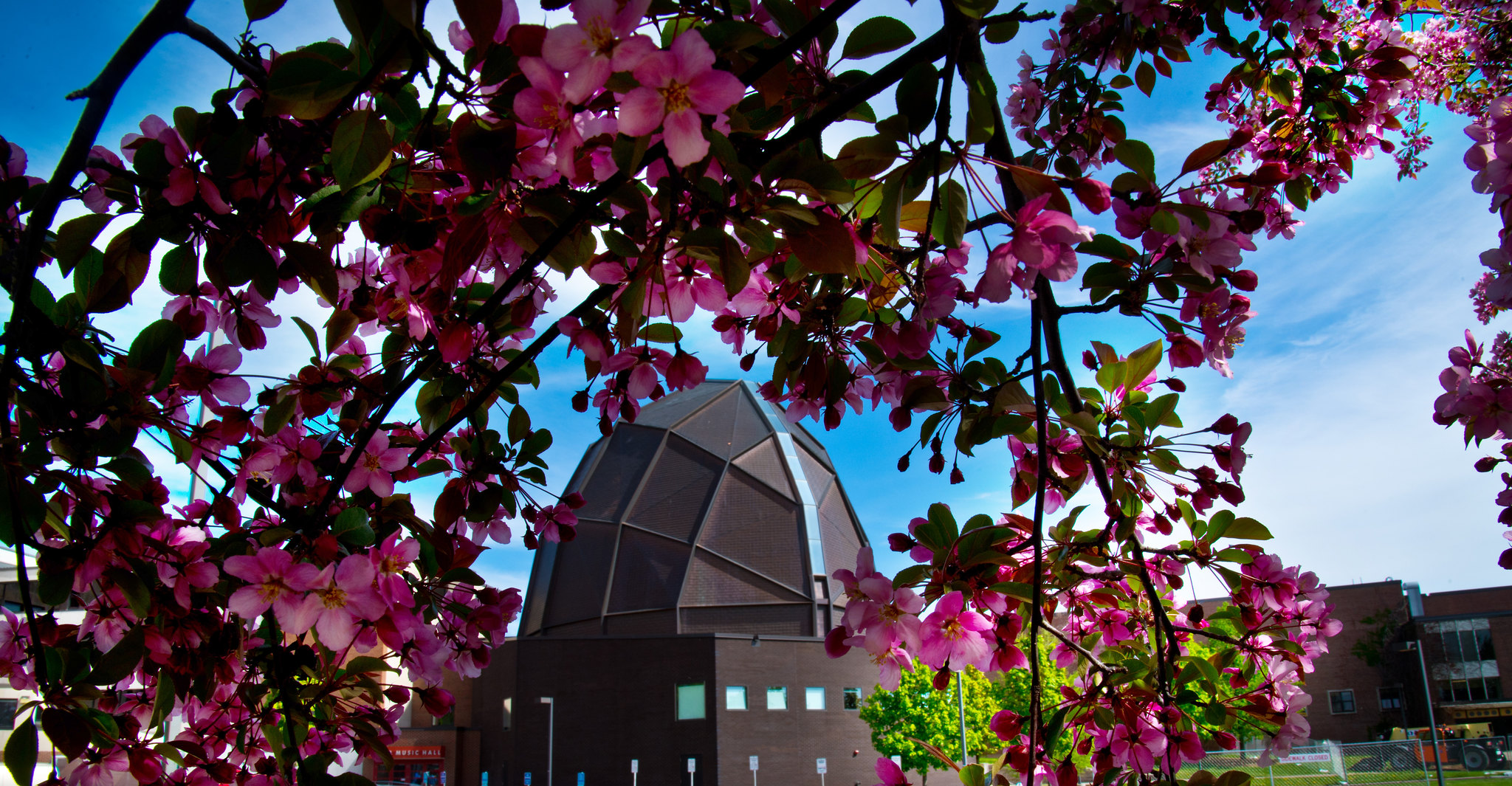 Pink flowers framing a dome-shaped building.